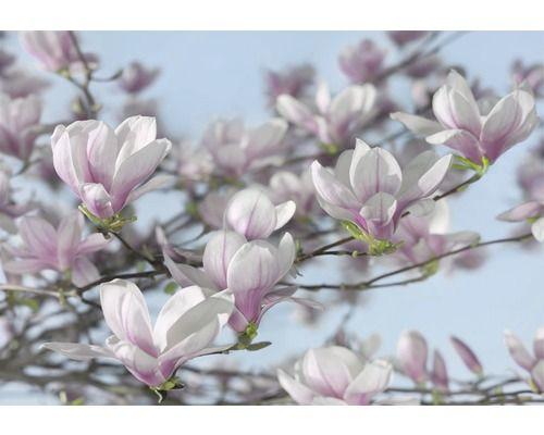 KOMAR Fotobehang Magnolia, 368 x 254 cm kopen bij HORNBACH