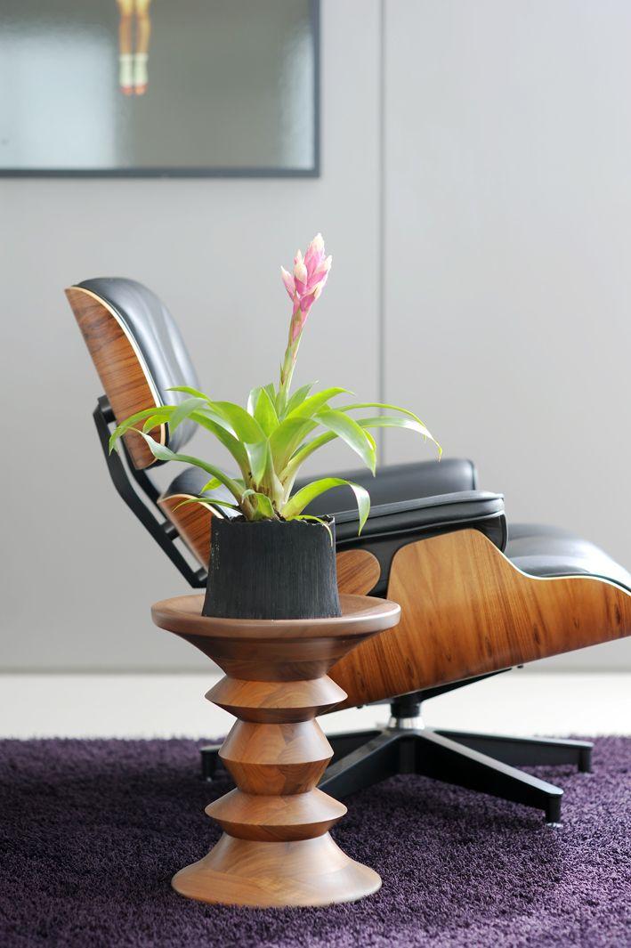 Bromelia   Woonplant Van De Maand November. #plant #bromelia #interior  #interieur