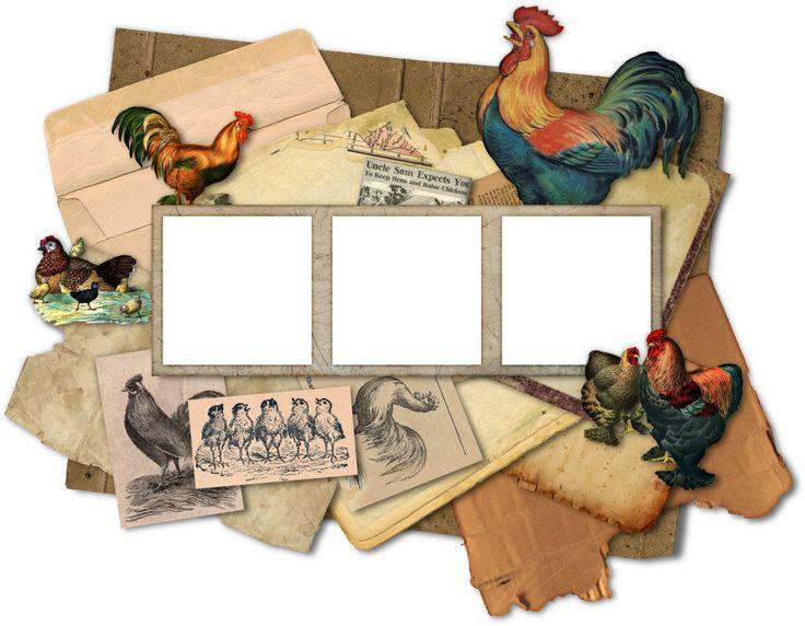 Vintage Rooster And Chicken Frames by HGGraphicDesigns.deviantart.com on @DeviantArt