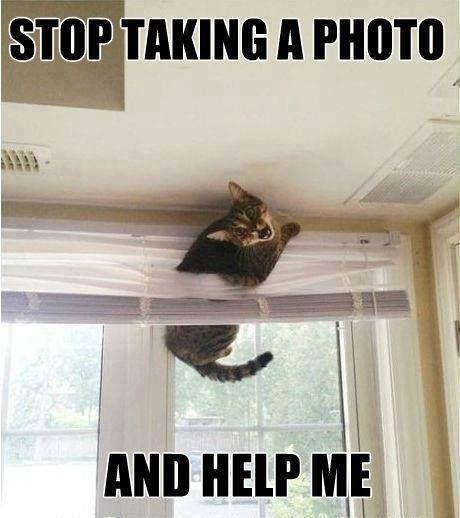 Funny cat help me - http://jokideo.com/funny-cat-help-me/