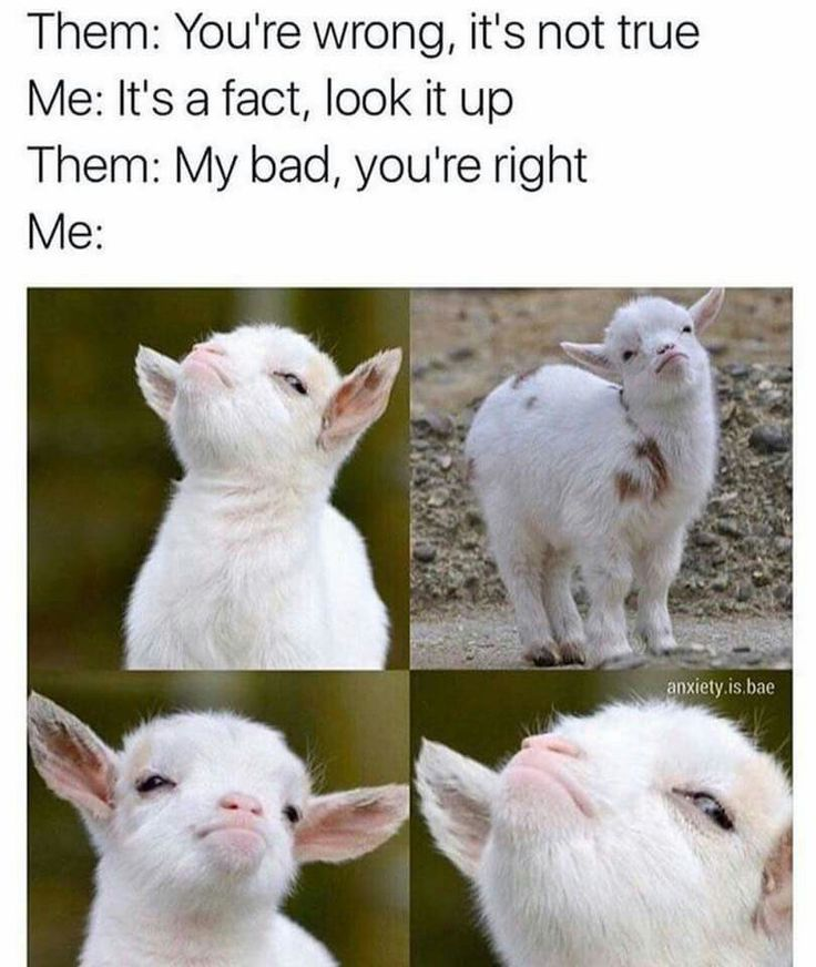 My goat is like this ALL the time I'm like 'Sorry Ginger that was my fault' and that's her face EXACTLY!!!! Like no joke!!!