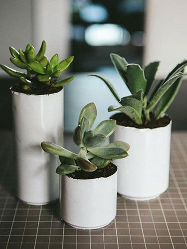 whitewashed soda cans + succulents = easy DIY planters