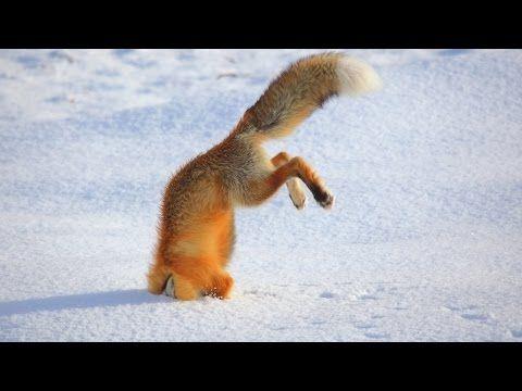 점프가 실패 재미있는 동물 - 가장 재미있는 동물 - YouTube