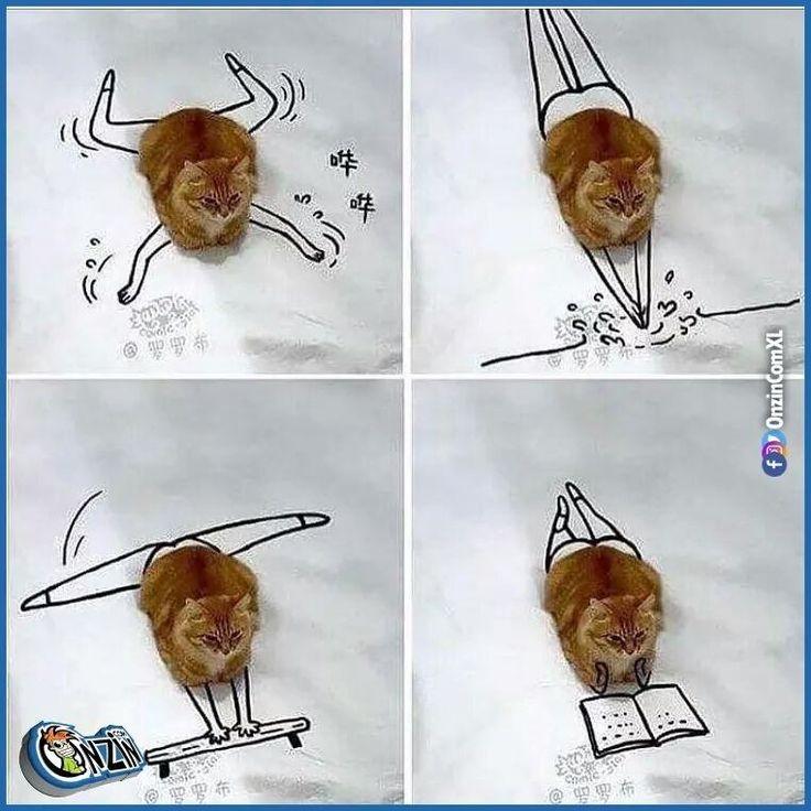 Kattenhumor. funny cats. Soms kan je lachen om een kat. Dit is ook leuk uitgevogeld