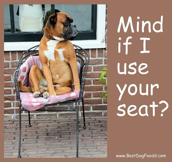 If you have a boxer you will get this!
