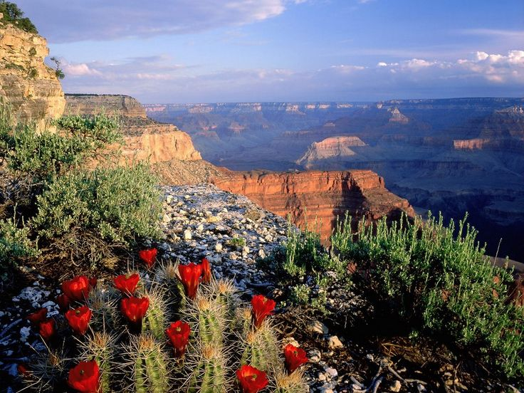 Grand Canyon National Park. So beautiful!The National, Nature Pictures, National Geographic, Grandcanyon, Day Trips, Grand Canyon National, Sweets Life, National Parks, Desktop Wallpapers