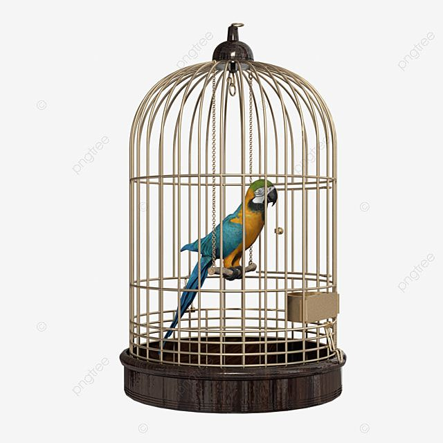 Parrot In A Cage Bird Parrot Animal Png Transparent Clipart Image And Psd File For Free Download Bird Parrot Bird Line Drawing