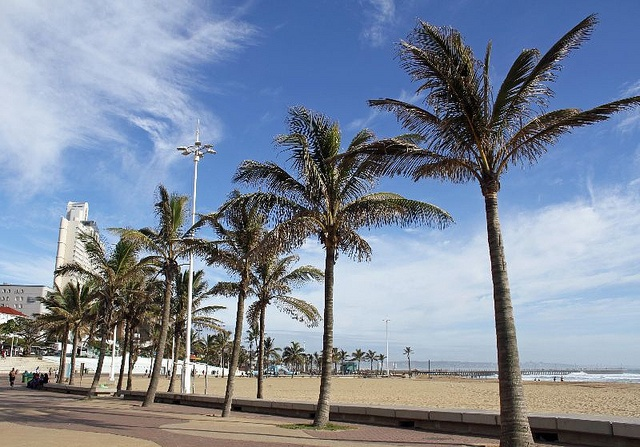 Palm trees on the Durban Beachfront