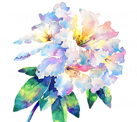watercolour flower painting rhododendron
