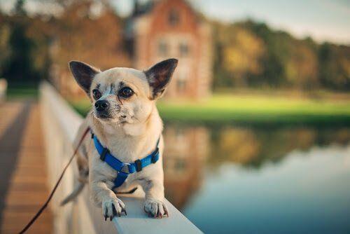 ¿Tu perro no se comporta como esperas? En este artículo compartimos algunos datos para que mejore su conducta y sepas por qué retarlo por su nombre no llega a buen puerto.