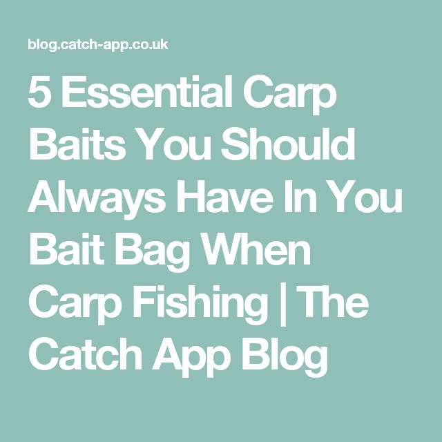 5 Essential Carp Baits You Should Always Have In You Bait Bag When Carp Fishing | The Catch App Blog
