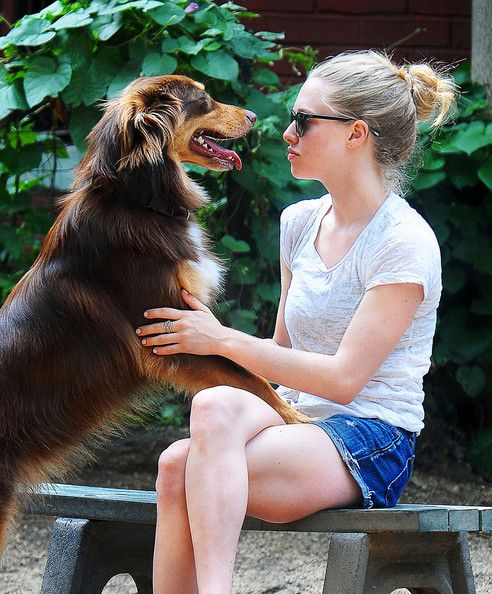 amanda seyfried dogs photos | Amanda Seyfried Pictures - Amanda Seyfried Walks Her Dog in New York ...