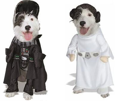 disfraces para perros: Carnival Carnaval Ideas, Costumes, De Halloween, Pet, Halloween Para, Animal, Disfraces Para Perros, De Perritos