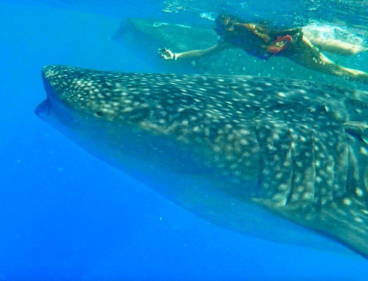 1  Una strabiliante nuotata a pochi metri di distanza dagli squali balena, che ci ha permesso di ammirarli in tutta la loro bellezza, mentre dolcemente si muovevano nell'acqua come una danza dal ritmo costante e rassicurante.