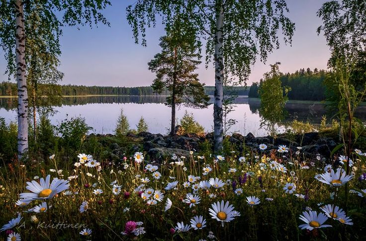 Summer night in Finland. Photography Asko Kuittinen