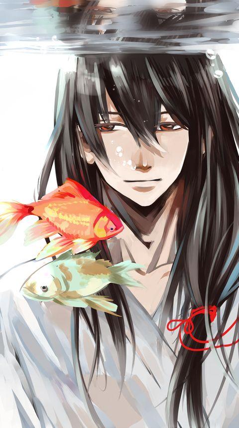 Katsura - goldfish