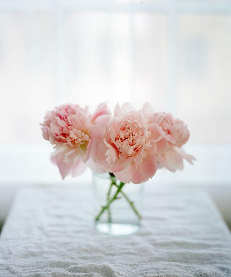 분홍 장미에 관한 상위 25개 이상의 Pinterest 아이디어  분홍모란 ...