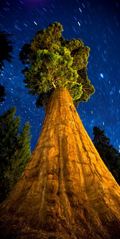 "The General Sherman Tree at Sequoia National Park in California (from the book: ""The National Parks: Our American Landscape"") • author / photo: Ian Shive on Wordpress"