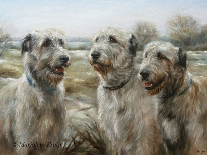 'Irish Wolfhounds', 80x60 cm, oil painting (sold/commission) ~Pet portraits, paintings cats and dogs by Marjolein Kruijt