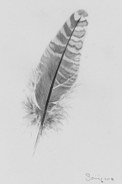 best 279 plume feather images on pinterest other feather earrings feather painting and. Black Bedroom Furniture Sets. Home Design Ideas