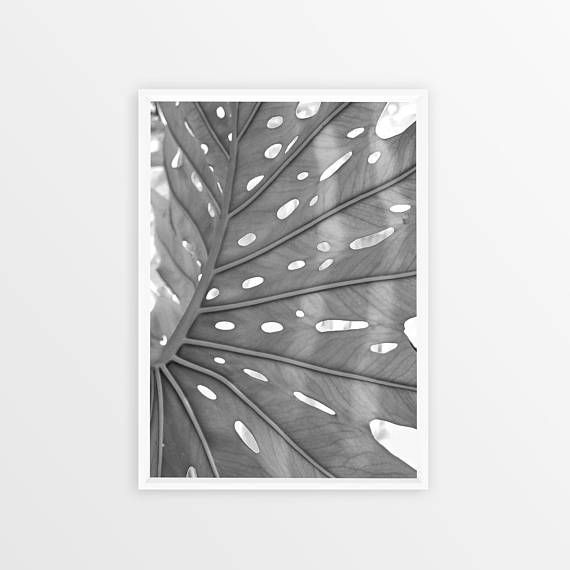 Scandi Plant Print Exotic Leaf Black and White Plant Art