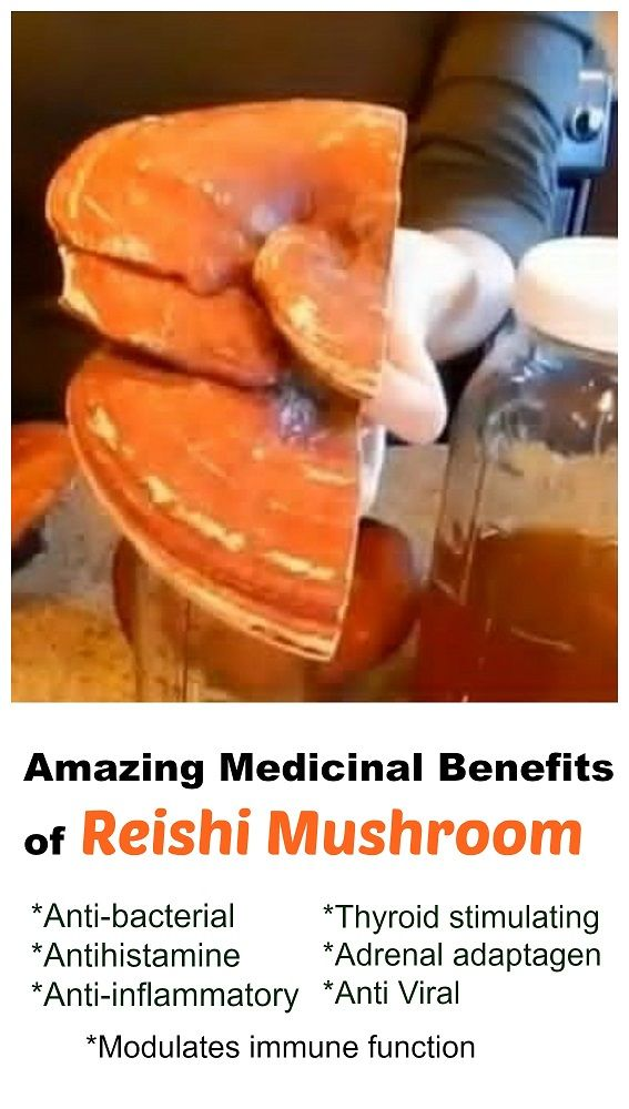 reishi mushroom benefits essay The reishi mushroom, also known as ganoderma lucidum or lingzhi, is used in traditional asian medicine to treat a wide variety of health conditions from.