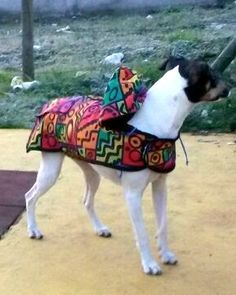 Patrón gratis para imprimir casa de ropa para perros capa con capucha impermeable talla S M L