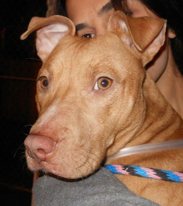 Dog Bless Dog Rescue
