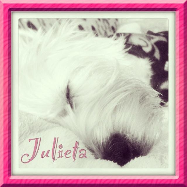 Julieta #westie #westies #potingos