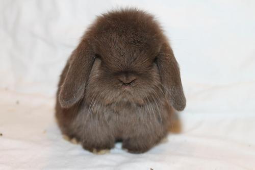not so happy chubby bunny