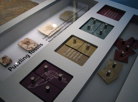 Puzzling fossils in the Treasured exhibition at the National Museum of Scotland