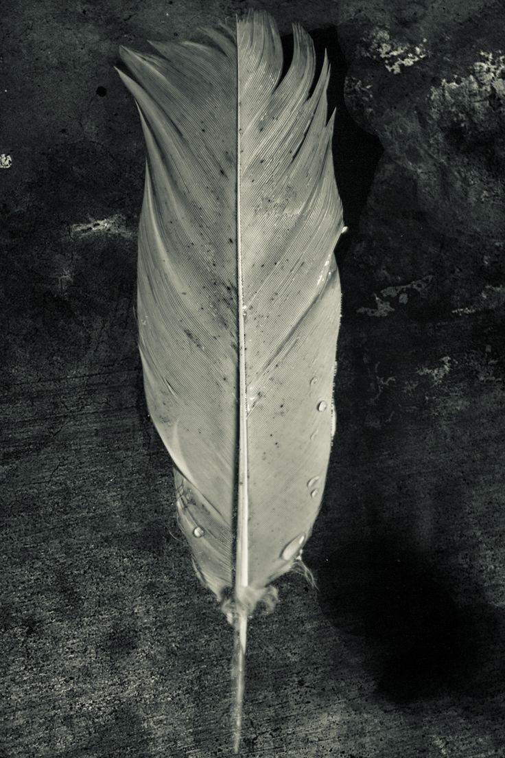 As i want to introduce symbols into my sires, i tried the wet plate effect on a feather, I felt that i couldn't get the result that i was looking for. on reflection I think i had a texture that was to hard and cold compared to my other edits that are smooth and warm. Secondly, A wet plate effect is random and I tried to create a random effect but the feather become lost with in the edit and i feel that the viewers eye was not being directed to where I wanted it to be.