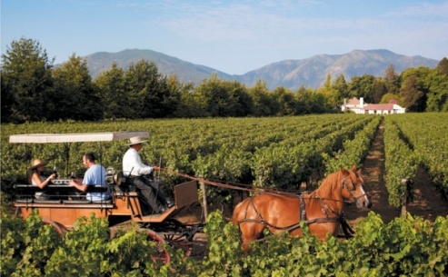 Harvesting grapes in Chile's Colchagua Valley.