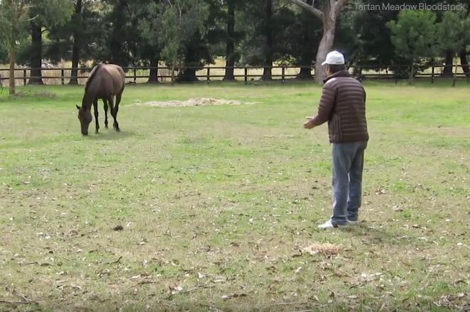 De man ziet zijn paard na drie jaar weer terug - Deze reactie van het dier had hij niet verwacht