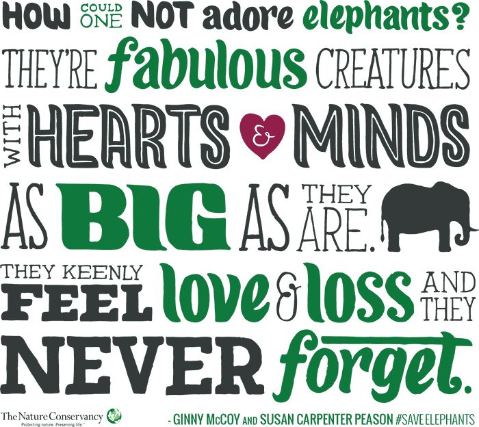 Elephants need you. See how you can help The Nature Conservancy. Learn more #SaveElephants -http://www.nature.org/media/elephants/share/quote.html