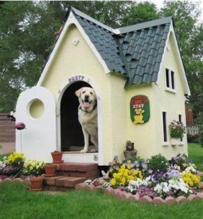 Labrador dog put spring flowers in front of his house
