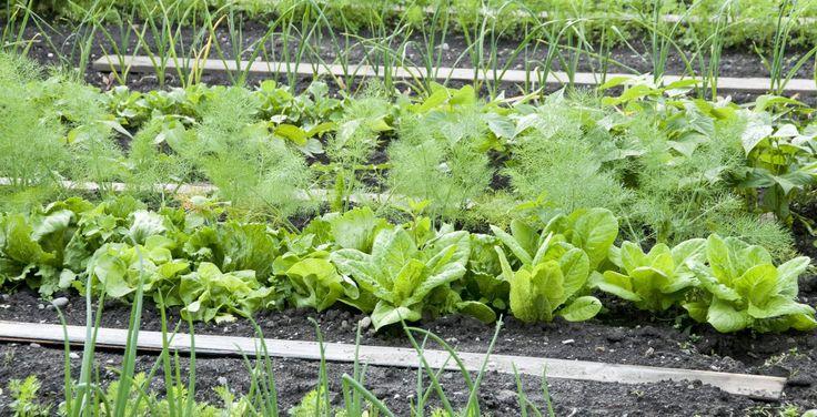 Οφέλη Εναλλασσόμενων καλλιεργειών