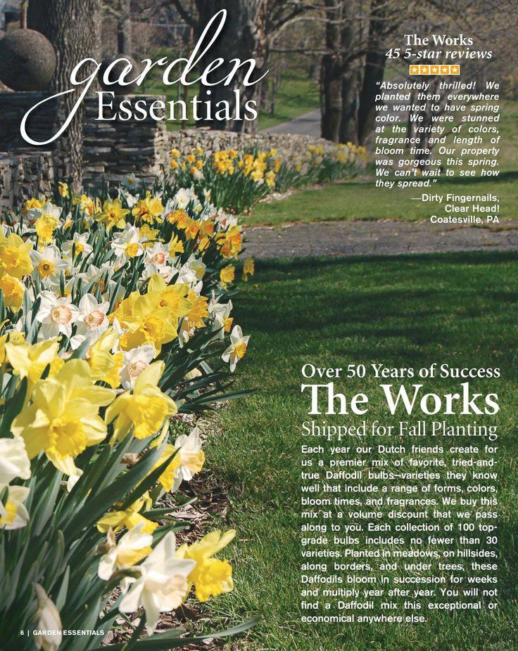 161 best bulbs images on pinterest beautiful gardens bulb and bulbs white flower farm catalogs mightylinksfo Images