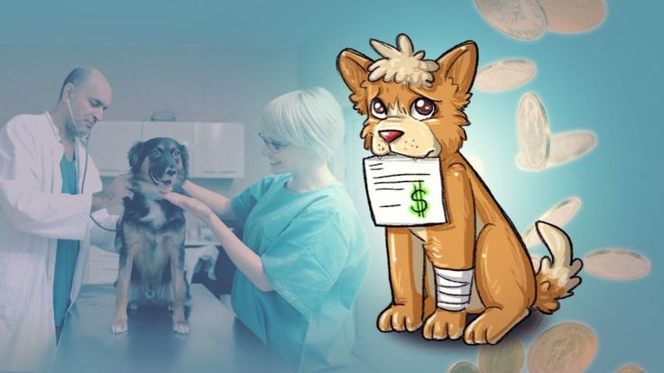 How to Pay Expensive Vet Bills Without Going Broke