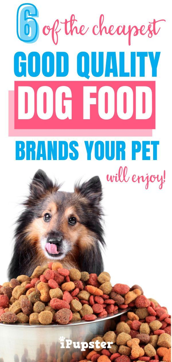 Pin On Healthy Dog Foods
