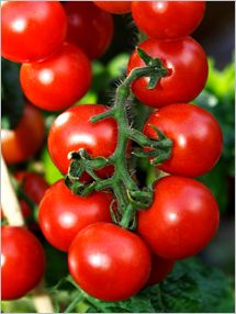 Fruit and Vegetable Database : Cherry Tomatoes Nutrition, Storage, Selection, Preparation: Benefits to Health : Fruits And Veggies More Matters.org