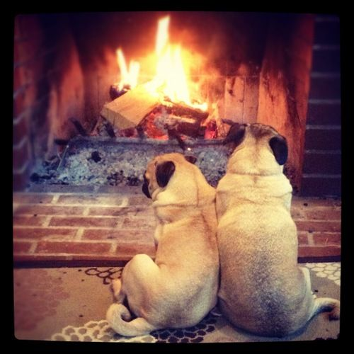Nothing like cuddling by the fire.