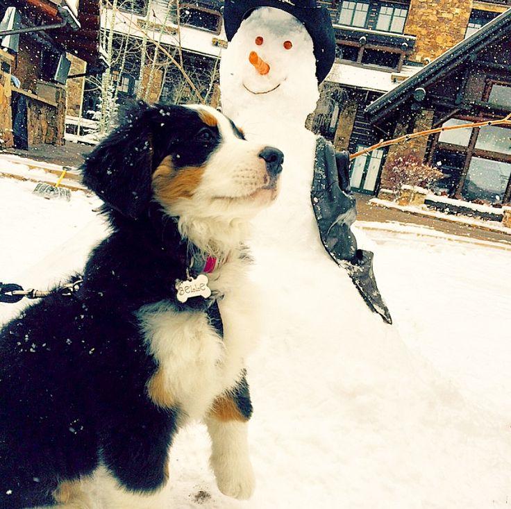Avon Colorado Dog Friendly Hotels