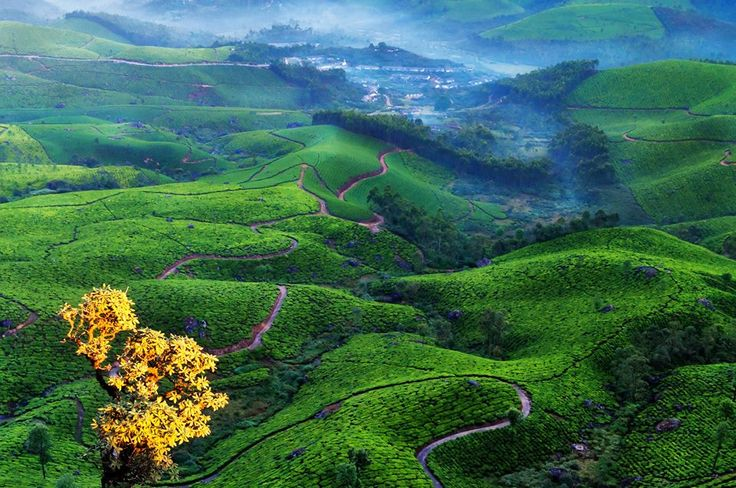#Munnar Tour #Package #Ooty #Travels Ooty #Taxi #Kodaikanal #Tour Package #Cochin Tour Package #Coimbatore Ooty #Taxi Coimbatore #Cab #Rental  Munnar #Sightseeing #Taxi #Service