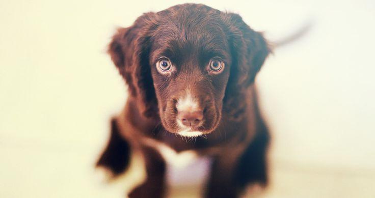 Gehoorzaamheidstraining oefeningen voor je hond