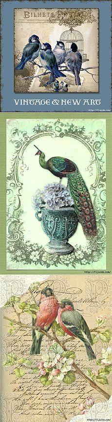Красивые птицы в винтажных картинках..