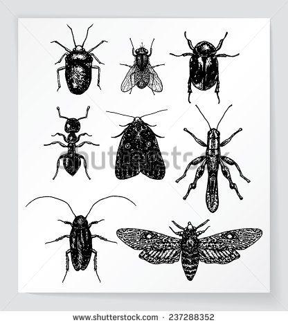 Arte e grafica vettoriale d'archivio di Insects | Shutterstock