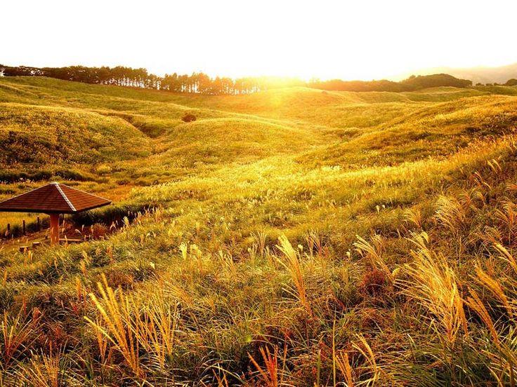 黄金色につつまれる秋旅は東伊豆の絶景へ #ちょこ旅