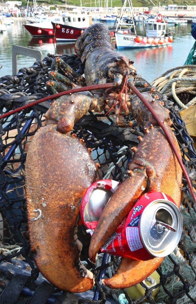 Giant two-and-a-half foot lobster, 60, saved from the kitchen pot