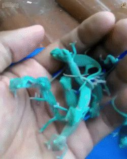 Some baby chameleons for you guys.